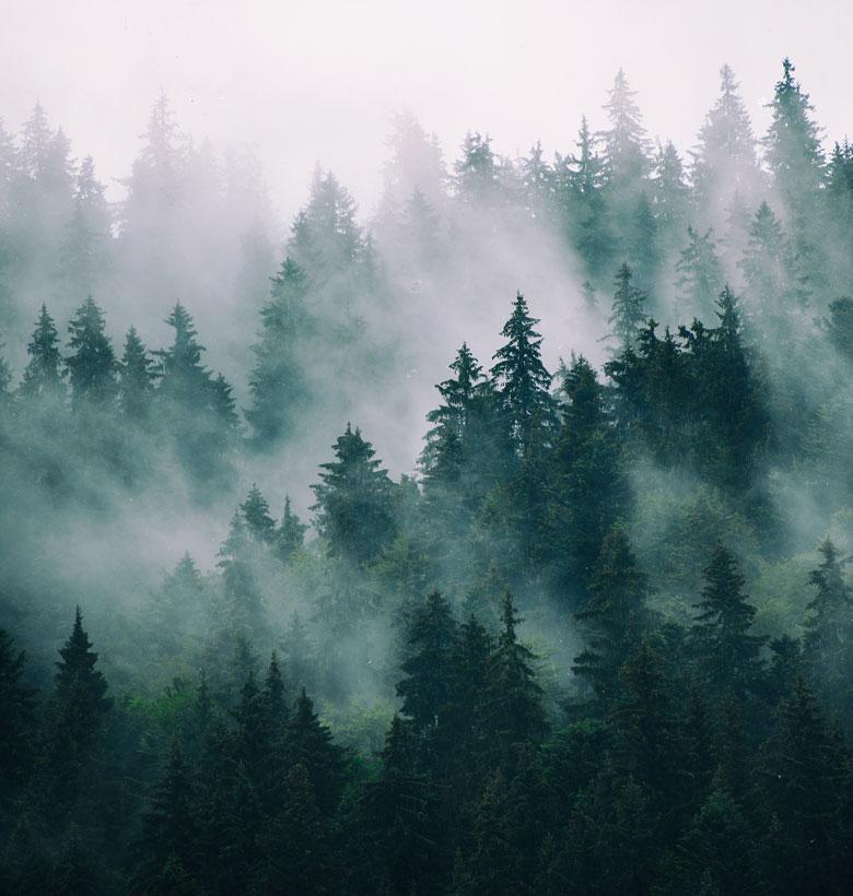 guerino-legno-foresta